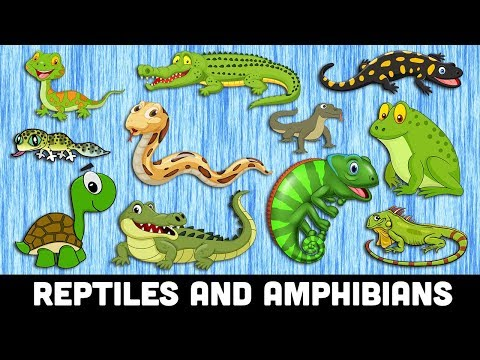 REPTILES For Kids | Learn REPTILES And AMPHIBIANS Animals Names For Kindergarten