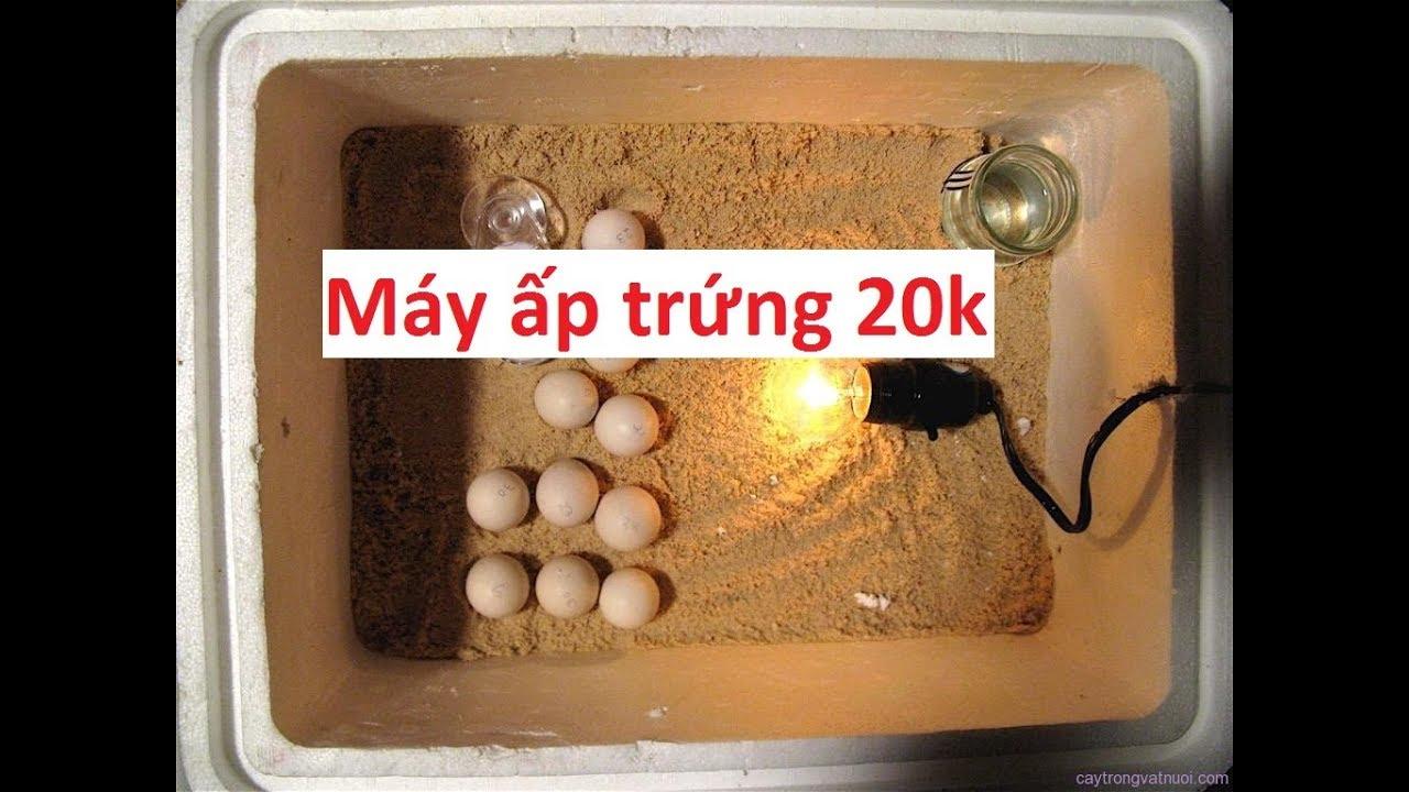 Hướng dẫn làm máy ấp trứng tự chế, tiện lợi, đơn giản, dễ sử dung, máy ấp trứng mini cho gia đình