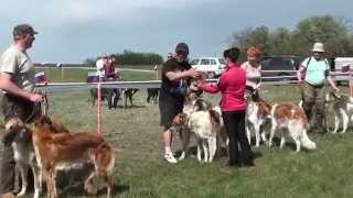 Выставка собак борзых пород
