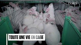 8 000 lapins dans des cages métalliques : les images chocs de L214 dans les Deux-Sèvres