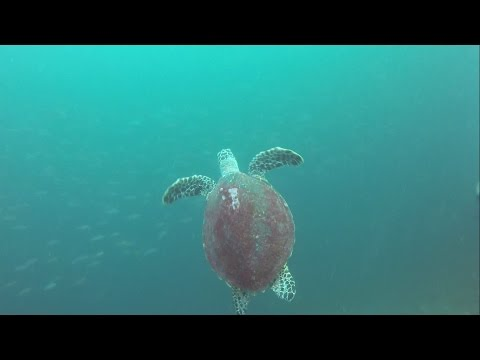 Diving El Nido - Palawan, the Philippines - February 2015