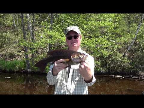 Big Menominee River Smallmouth