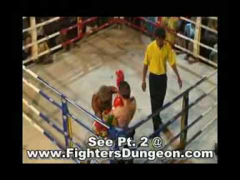 Intense Muay Thai Fight - U.K. vs. South Africa -Bangkok