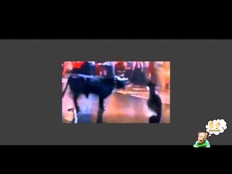 Illaramendi Batman, sfida un toro in strada