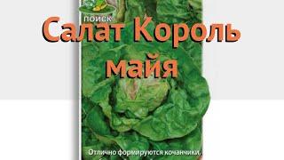 Салат обыкновенный Король майя Кочанный 🌿 обзор: как сажать, семена салата Король майя Кочанный