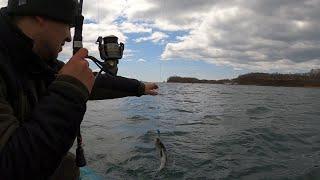 The Fish Морская рыбалка Минтай