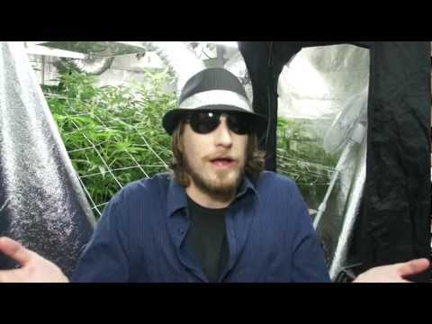 VaderVision - Cannapocalypse Day 72-79