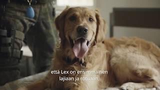 Vuoden Sotakoira 2019 Lex