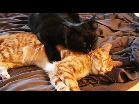 Cat Bromance xo