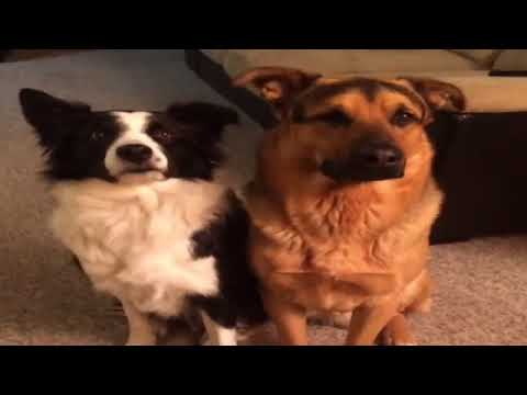 Best cute and funny Dog Vines