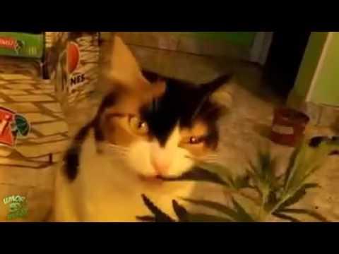 Кошка под кайфом😆