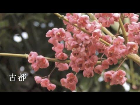 Piano Original Solo ー古都(CD「凛風」より)