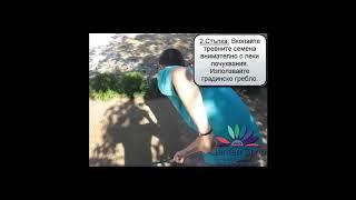 Jak založit (podsadit) trávník video