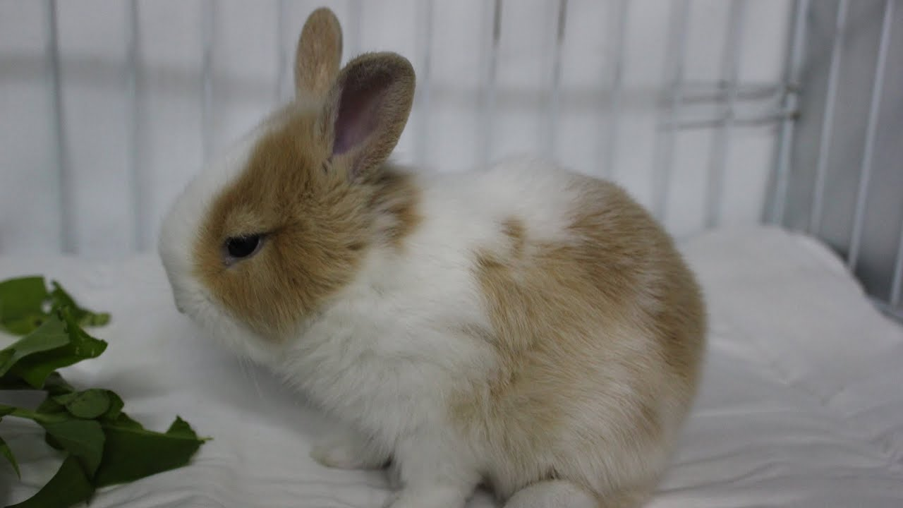 Moms Bunny Moms 47