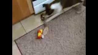 Собака собирает игрушки