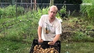 Harvesting Potatoes, Trick for Larger Onions & More - The Wisconsin Vegetable Gardener