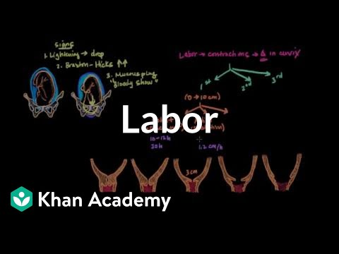 Labor | Reproductive system physiology | NCLEX-RN | Khan Academy