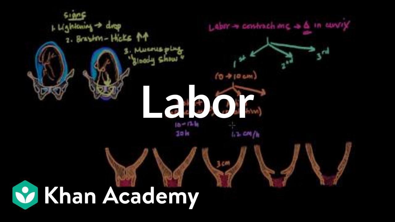 Labor   Reproductive system physiology   NCLEX-RN   Khan Academy