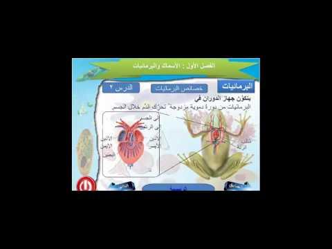 منظومة معرفة | مادة الأحياء للصف الثاني الثانوي | درس: البرمائيات 2