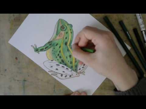 Как нарисовать лягушку квакушку поэтапно