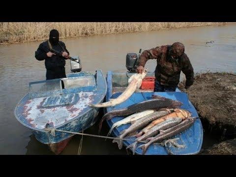 Браконьеры погоня,сброс рыбы