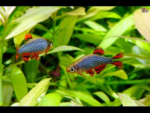 Unique Freshwater Aquarium | Tiny Fish | Colorful | Ocean