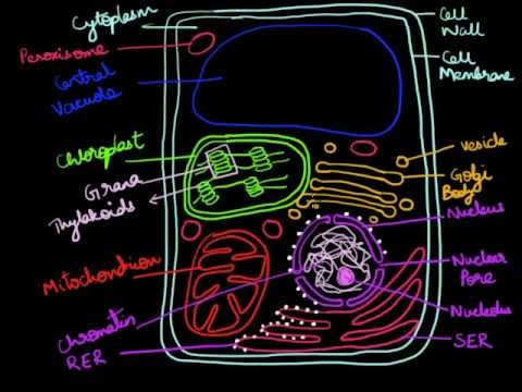 How To Draw A Cell Diagram Tractor Generator Wiring Plant Youtube