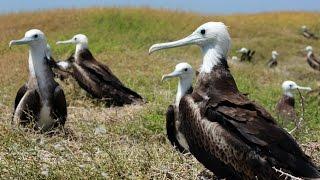 Anguilla - wildlife and heritage
