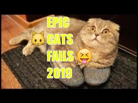 THE BEST CATS, FAILS COMPILATION EVER 2019