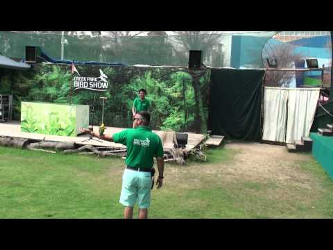 DUBAI CREEK PARK BIRD SHOW April 15,2014