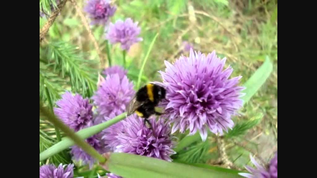how to get rid of bumble bees in garden