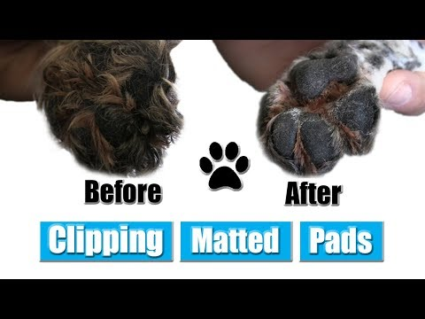 How To Clip Matted Dog Pads