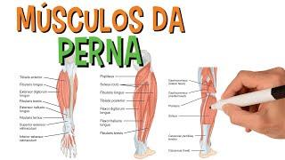 De perna humana diagrama músculos da