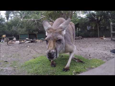 Perth April 2017 Day 2 Caversham Wildlife Park