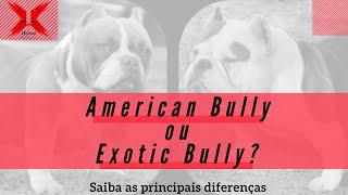 Quais as diferenças entre o American Bully e o Exotic Bully?