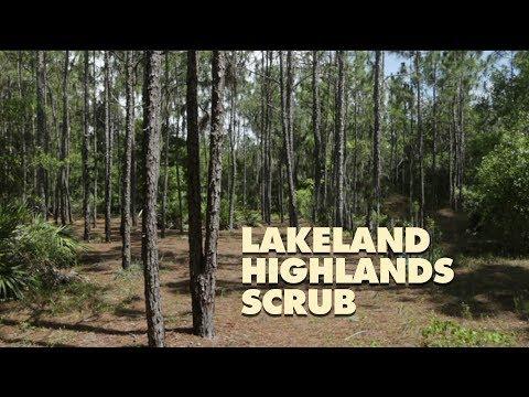 Lakeland Highlands Scrub