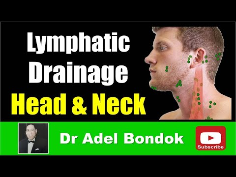 Lymph Drainage Of The Head And Neck, Dr Adel Bondok
