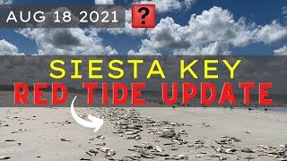 Florida RED TIDE   Siesta Key Beach Update  