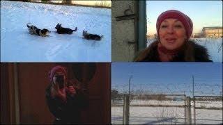 Влог /Vlog Дорога на работу, кошки, собаки, утки, outfit