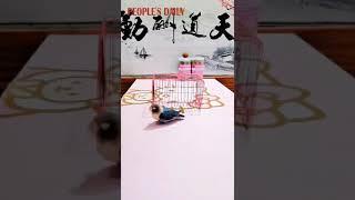 Parrot Talent Show: This little acrobat is amazing!