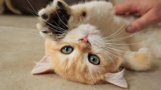 Cute and Sweet Sleepy Baby Kitten 😍🐾 Alfonso