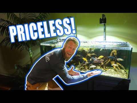 Priceless *FISH TANKS* - Retail Revamp: Part 1