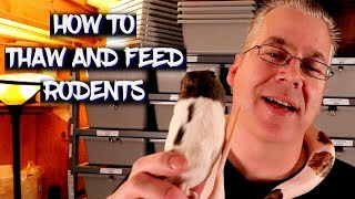 How to thaw aฑd feed frozen rodents