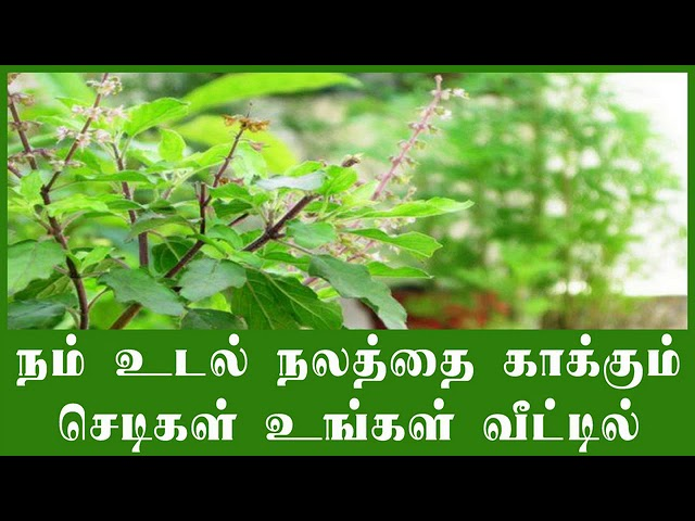 How to grow medicinal plants in your home in tamil