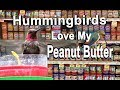 Hummingbird Feeder from Peanut Butter - DIY Set Up How to Make FREE with Jar-Attract Birds & Oriole