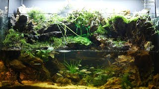 terrarium rainforest jungle di…