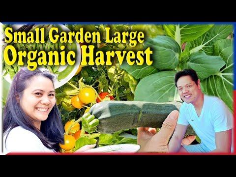 Edible Small Garden Large Organic Harvest Manila London Filipino Life In The UK Pinoy Vlog Gardening
