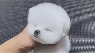 Милые видео с щенками Новые приколы с собаками Забавные щенки