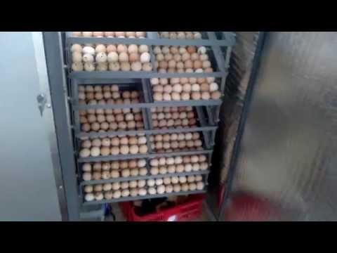 Máy ấp trứng gà tại yên từ, yên mô, ninh bình