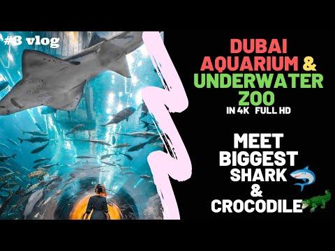 Dubai Aquarium & Underwater Zoo – BIG SHARK & CROCODILE, Ticket Price 2020-21 | Flying Turtle